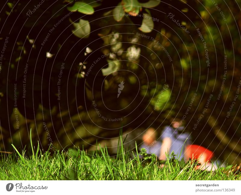 //tensioner perspective// Summer Spring Dark Multicoloured Grass Bushes Hatch Far-off places Idyll Picnic Hot Friendship Leisure and hobbies Sunday Saturday