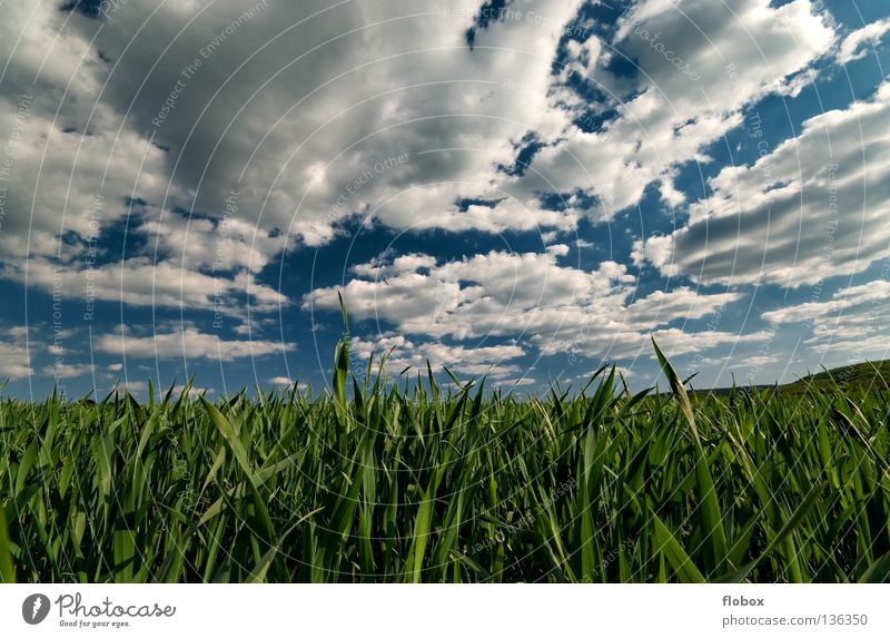 cloud curtains Cloud field Field Agriculture Cloud formation Wisp of cloud Clouds in the sky Panorama (View) Green White Sky blue Nature Landscape