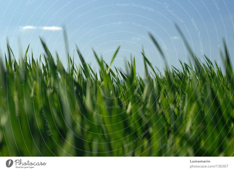 Nature Beautiful Sky Green Blue Plant Calm Clouds Meadow Grass Spring Power Field Weather Fresh New
