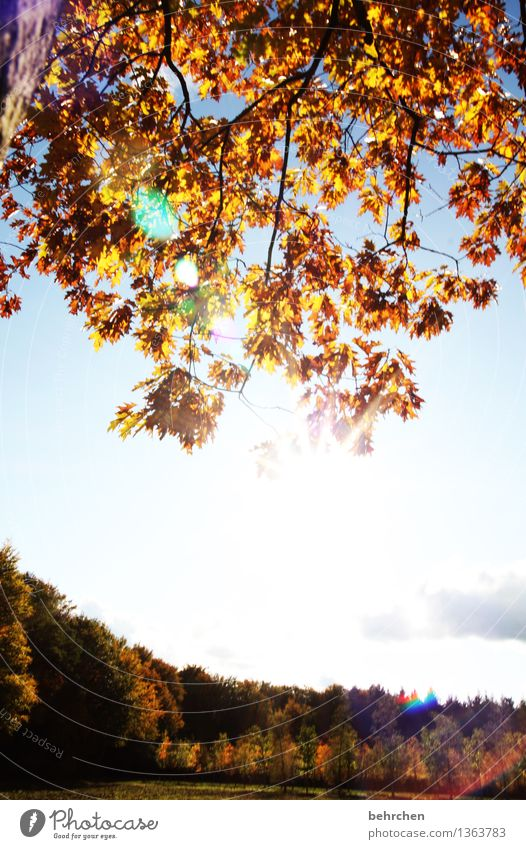 Sky Nature Plant Beautiful Tree Relaxation Clouds Leaf Forest Warmth Meadow Autumn Field Hiking To enjoy Beautiful weather