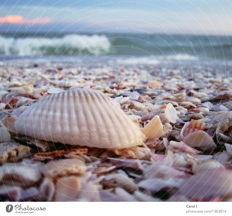 Vacation & Travel Beautiful Summer Water Sun Ocean Calm Beach Emotions Feminine Style Lifestyle Swimming & Bathing Sand Contentment Modern