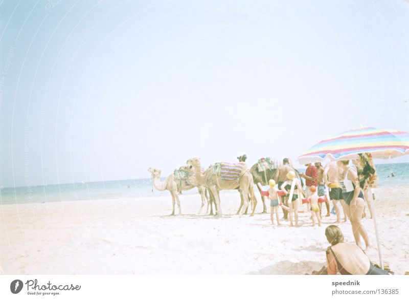 ascending straight (with camels) Dromedary Camel Animal Sunshade North Sea coast Lake Ocean Beach Vacation & Travel Sunbathing Heat Tourist Physics Hot Africa