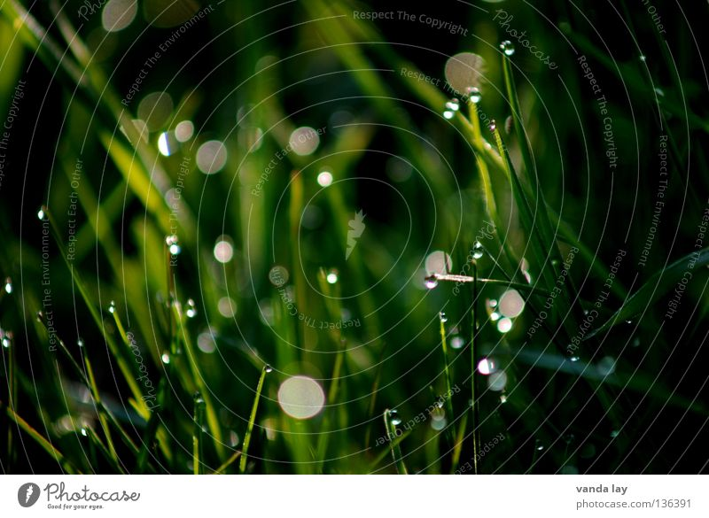 Nature Green Dark Meadow Grass Spring Drops of water Rope Fresh Point Point of light