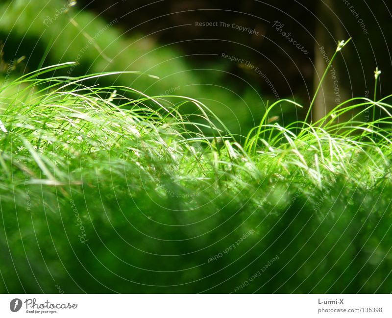 Green Meadow Jump Grass Spring