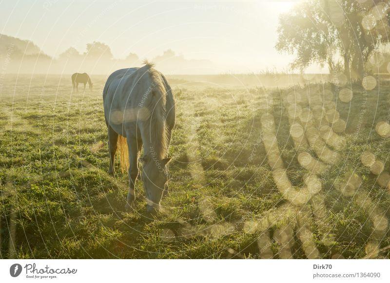 Beautiful Sun Tree Calm Animal Warmth Autumn Meadow Grass Healthy Fog Fresh Idyll Esthetic Fantastic Beautiful weather