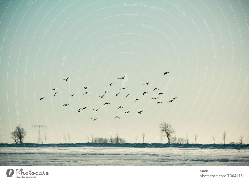 Sky Nature Blue Tree Landscape Animal Far-off places Winter Cold Environment Sadness Movement Snow Freedom Flying Bird