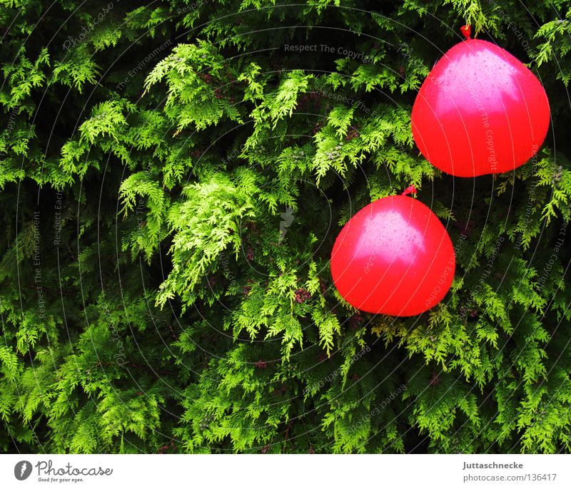 Green Red Summer Garden Park Rain Feasts & Celebrations Heart Wet Flying Birthday Drops of water Decoration Balloon Hang Hedge