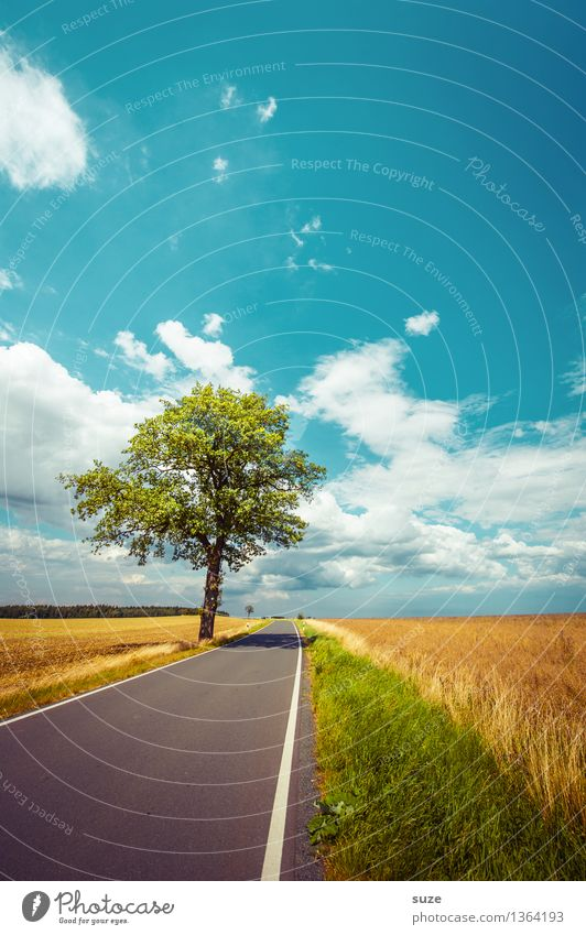 After the summer Environment Nature Landscape Plant Sky Clouds Horizon Autumn Weather Beautiful weather Tree Meadow Field Transport Traffic infrastructure
