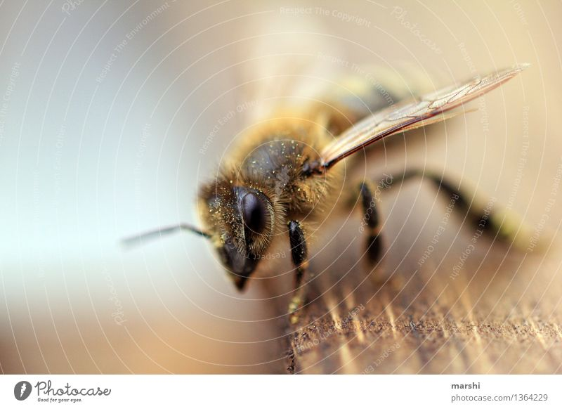 bee Nature Animal Garden Farm animal Wild animal Bee 1 Moody Endangered species Wing Blur Honey bee Bee-keeper Colour photo Exterior shot Close-up Detail
