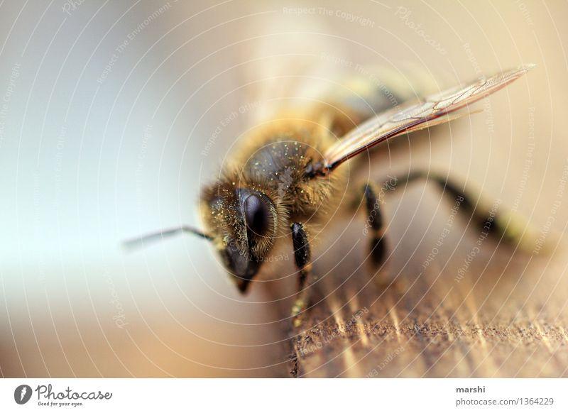 Nature Animal Garden Moody Wild animal Wing Bee Farm animal Bee-keeper Honey bee Endangered species