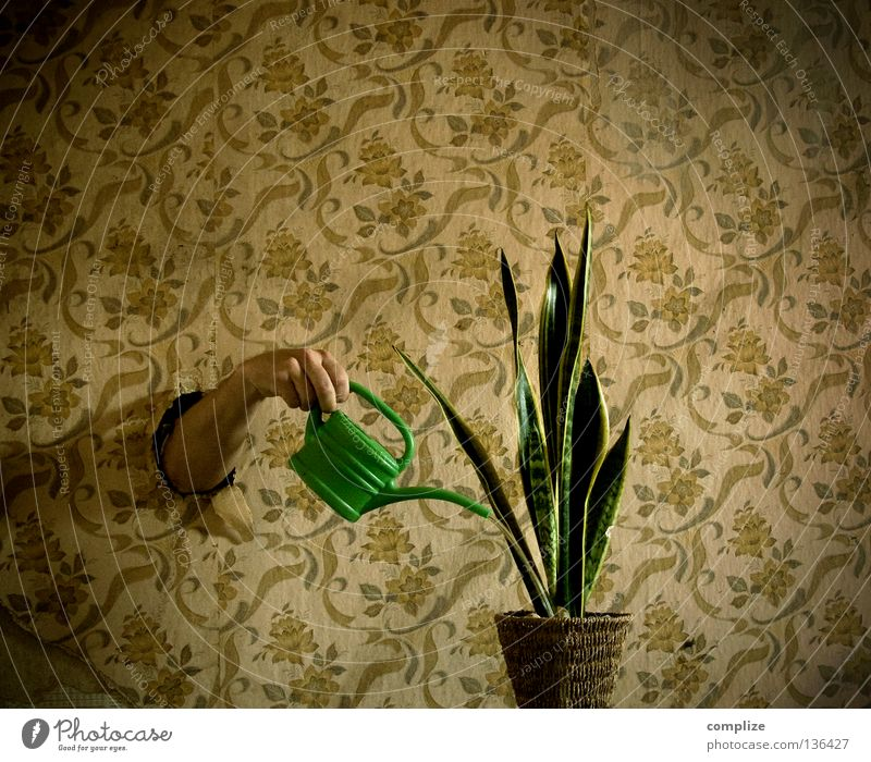 Water Plant Flower Loneliness Interior design Dream Room Flat (apartment) Arm Living or residing Retro Creativity Wallpaper Services Whimsical Hollow
