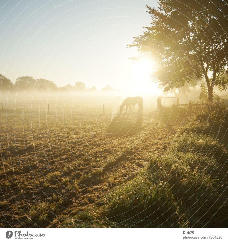 Sun Tree Loneliness Landscape Calm Animal Life Autumn Meadow Grass Natural Bright Contentment Field Fog Illuminate