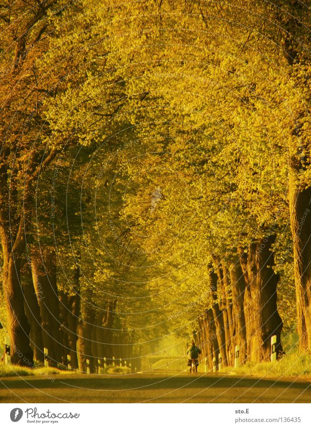 cycling under crowns Tree Treetop Avenue Beaded Bicycle Leaf Branchage Moody Traffic infrastructure Row Nature Street Level Line Curve Cycling