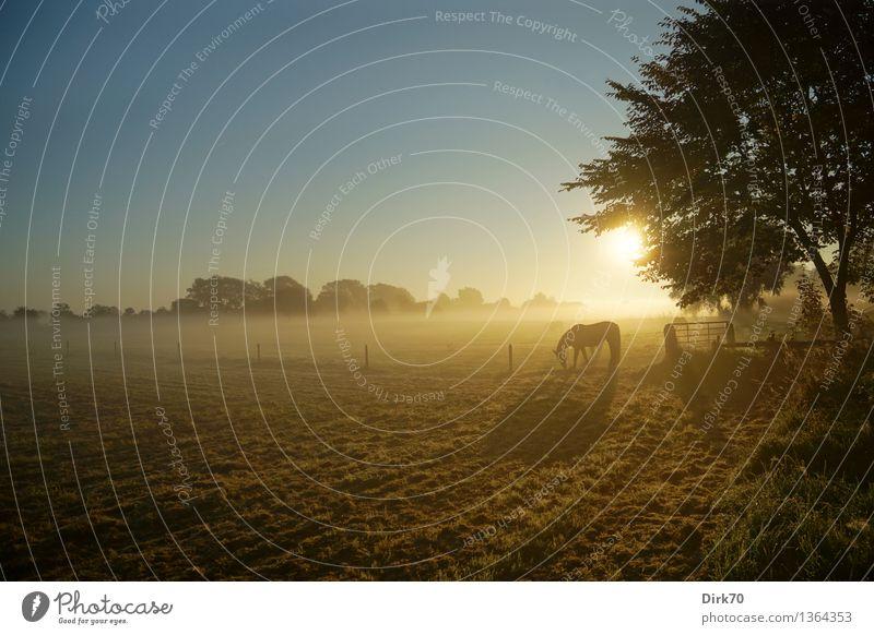 Nature Summer Sun Tree Landscape Calm Animal Environment Life Autumn Meadow Grass Horizon Contentment Illuminate Free