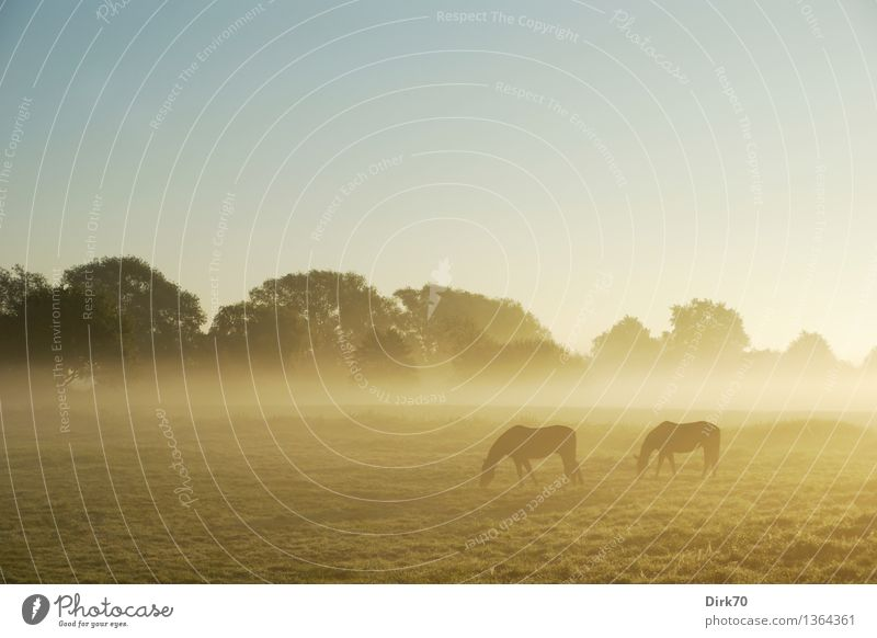 Summer Tree Landscape Calm Animal Far-off places Warmth Autumn Meadow Eating Grass Natural Fog Free Pair of animals Climate