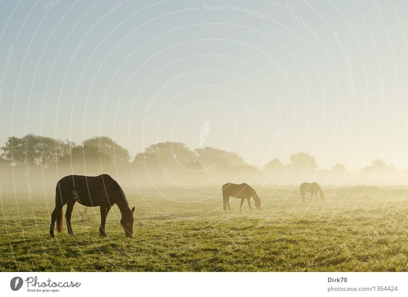 All the beautiful horses Ride Agriculture Forestry Nature Landscape Cloudless sky Autumn Beautiful weather Fog Tree Grass Bushes Meadow Field Pasture Animal Pet