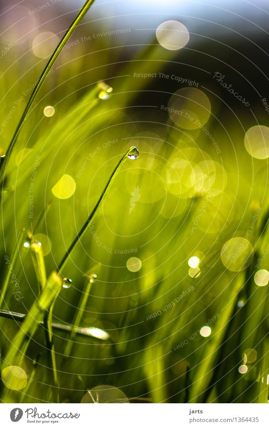 green with drops Plant Drops of water Beautiful weather Grass Fluid Fresh Bright Wet Natural Nature Transience Colour photo Exterior shot Close-up