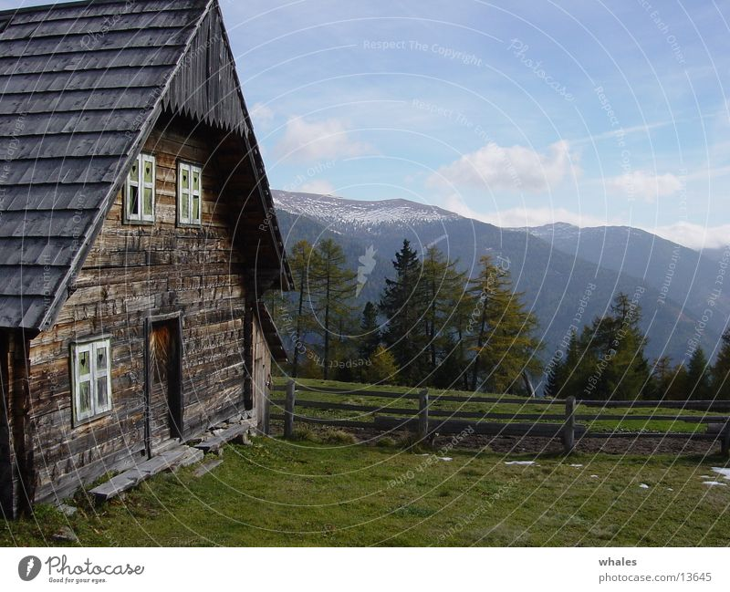 Nature Tree Forest Mountain Freedom Landscape Hut