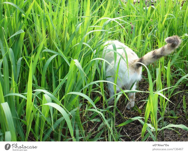 Cat Green Animal Grass Spring Bushes Search Hind quarters