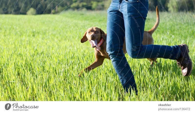 Dog Joy Meadow Movement Legs Friendship Walking Running Fitness Partner Mammal Human being