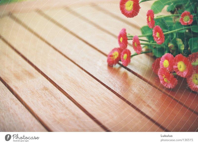 Flower Green Yellow Blossom Wood Brown Fog Table Damp