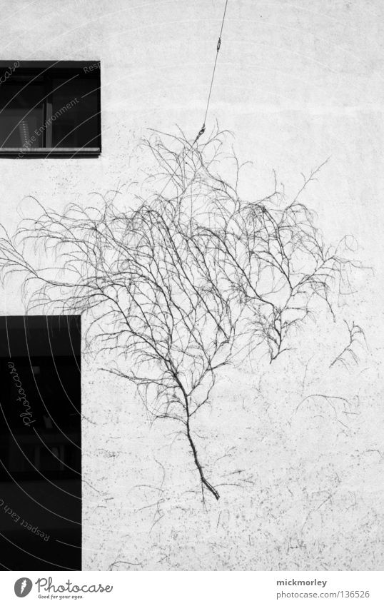 Another Tree on the Wall Wall (building) Bushes Window Really Street art Black White Effect Maturing time Habitat Life Nature Traffic infrastructure reality