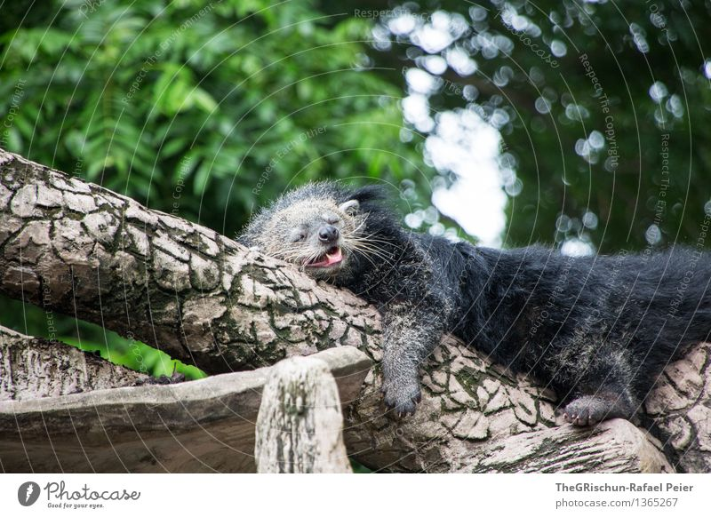 Green White Tree Relaxation Animal Black Hair and hairstyles Brown Lie Sleep Tree trunk Pelt Fatigue Zoo Exhaustion Tongue