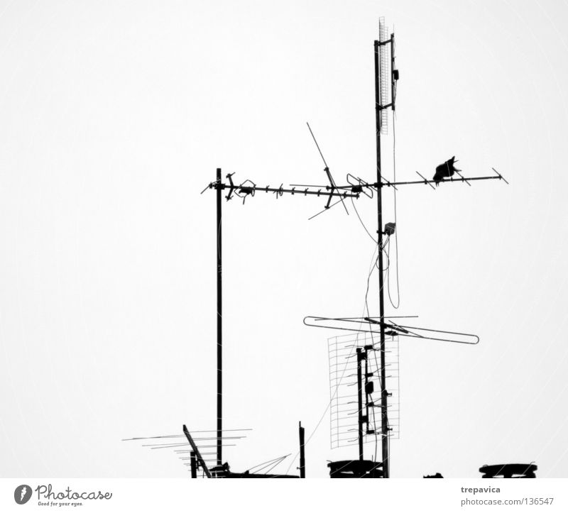 Tree House (Residential Structure) Metal Waves Horizon Bird Roof Television Antenna Black & white photo Signal Raven birds Roof antenna