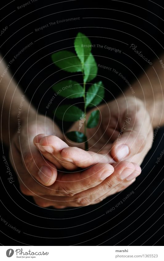 Human being Nature Plant Hand Landscape Leaf Environment Emotions Moody Masculine Leisure and hobbies Living or residing Bushes Protection Symbols and metaphors