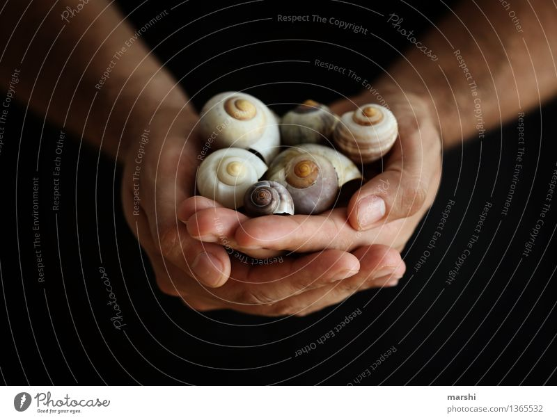 homeowner Human being Masculine Young man Youth (Young adults) Man Adults Hand 1 Environment Nature Animal Moody House (Residential Structure) Snail shell