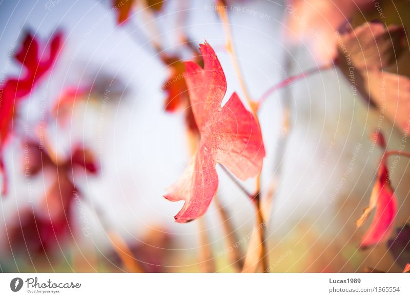 Sky Nature Plant Blue Green Beautiful Flower Red Landscape Leaf Forest Environment Blossom Autumn Dye Meadow