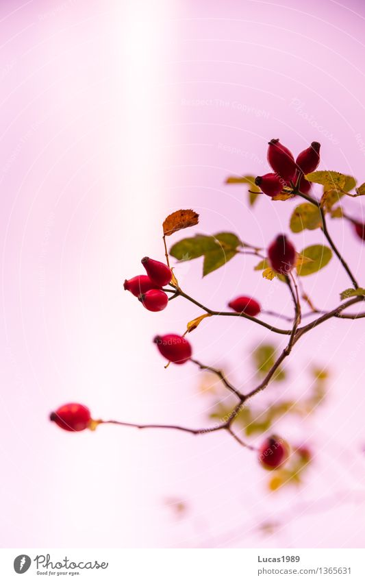 Nature Plant Green Beautiful Summer White Red Landscape Leaf Environment Blossom Autumn Eating Natural Healthy Food