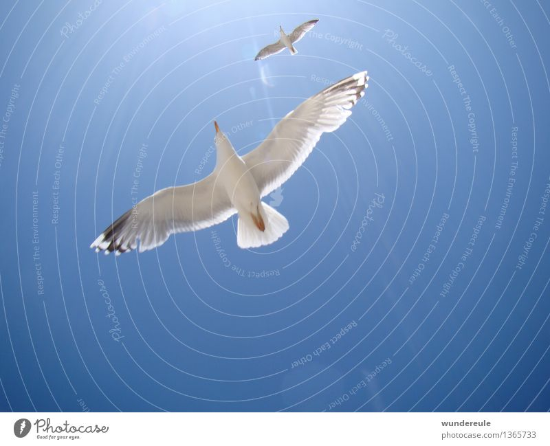 Sky Nature Blue Summer White Sun Relaxation Ocean Animal Far-off places Beach Coast Freedom Flying Bird Together