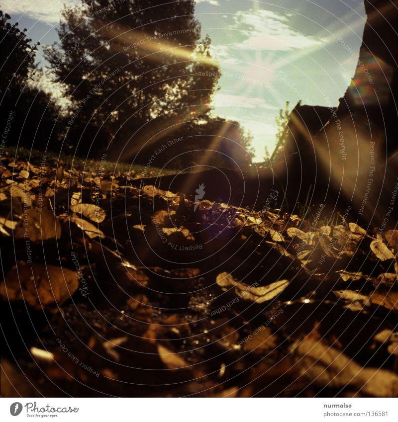 Beautiful Sun Leaf Autumn Emotions Warmth Moody Brown Lighting Analog Under Illuminate Seasons East