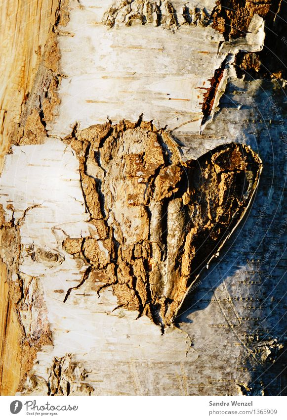 tree-heart Environment Nature Tree Wood Sign Heart Sympathy Love Infatuation Romance Colour photo Exterior shot Abstract Pattern Structures and shapes Deserted