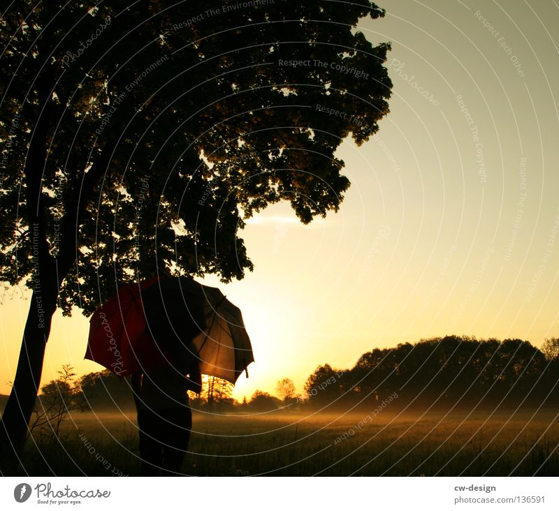 EARLY RISER I Field Meadow Fog Umbrella Sunshade Man Grass Tuft of grass Tree Forest Morning Dew Drops of water Hover Red White Blade of grass Plant Damp Wet