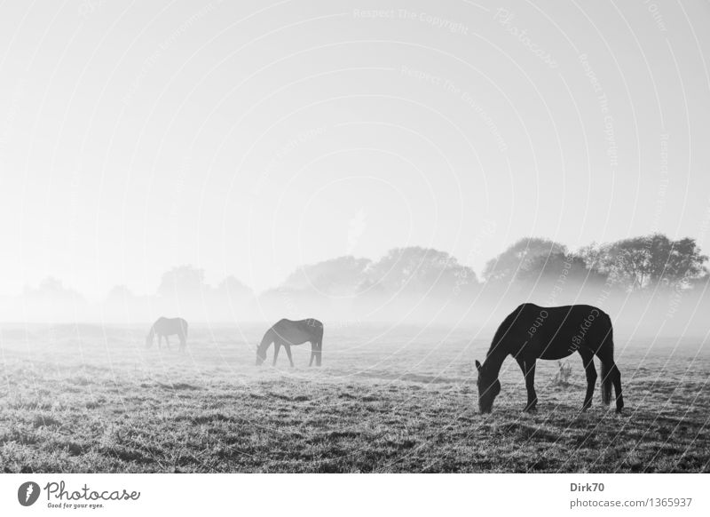 Nature Landscape Calm Animal Far-off places Cold Meadow Bright Horizon Fog Stand Esthetic Fantastic Group of animals Beautiful weather Eternity
