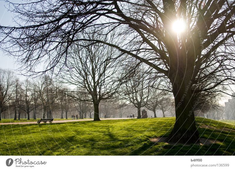 backlight park Park Morning Oversleep Fog Meadow Fresh Green Juicy Downtown Grass Tree Back-light Calm Deserted Loneliness Peace Garden slightly foggy Landscape