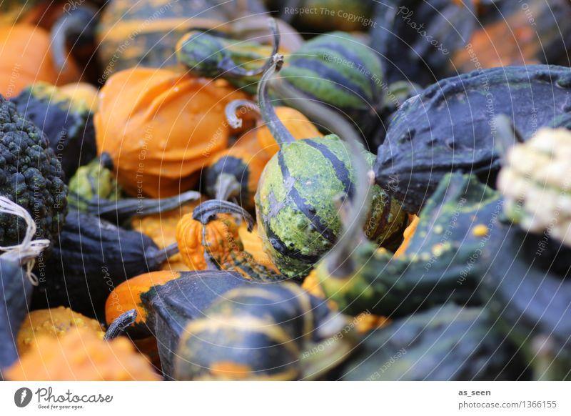 Nature Plant Green Colour Calm Black Environment Warmth Life Autumn Lie Orange Design Contentment Illuminate Decoration