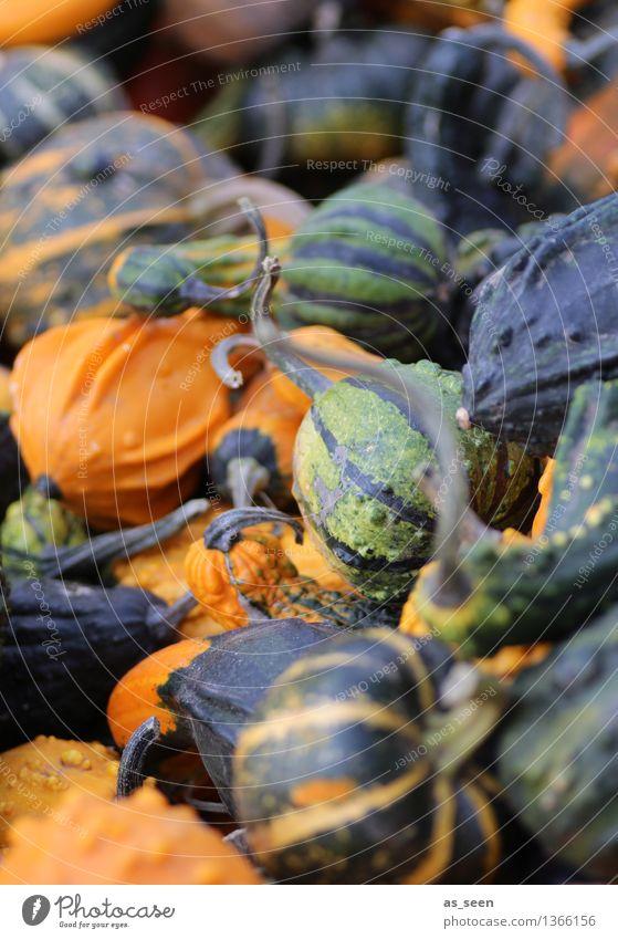 pumpkins Shopping Exotic Life Senses Thanksgiving Hallowe'en Environment Nature Plant Autumn Agricultural crop Pumpkin Illuminate Lie Authentic Round Many Green