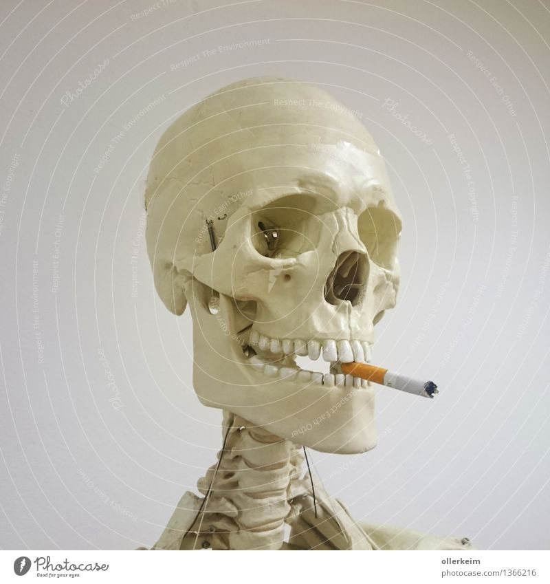 Skeleton - Smoker II Healthy Smoking Human being Body Head Cigarette Threat To enjoy Teeth Set of teeth Death's head Colour photo Interior shot Detail