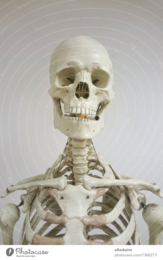 Skeleton - Smoker III Healthy Smoking Human being Body Head Cigarette Threat To enjoy Teeth Set of teeth Shoulder Collarbone Spinal column Death's head