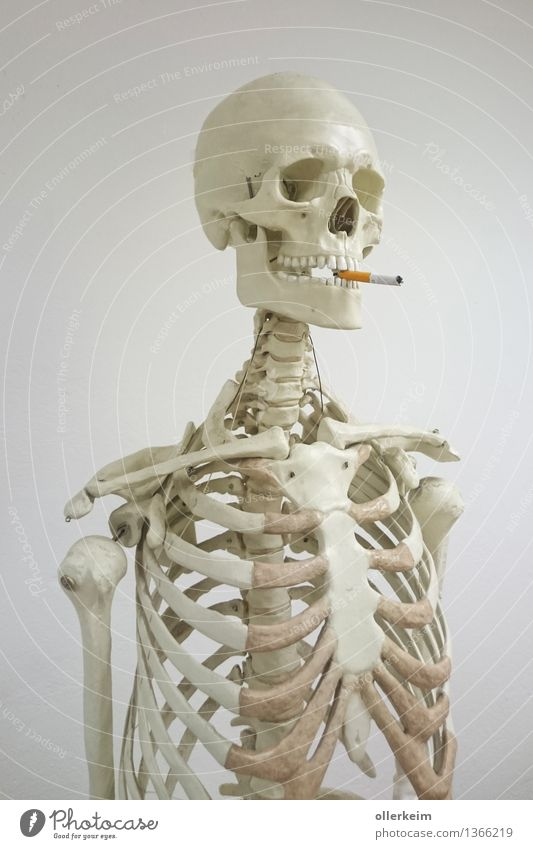 Skeleton - Smoker I Healthy Smoking Human being Body Head Face Cigarette Threat To enjoy Upper body Death's head Colour photo Interior shot Deserted