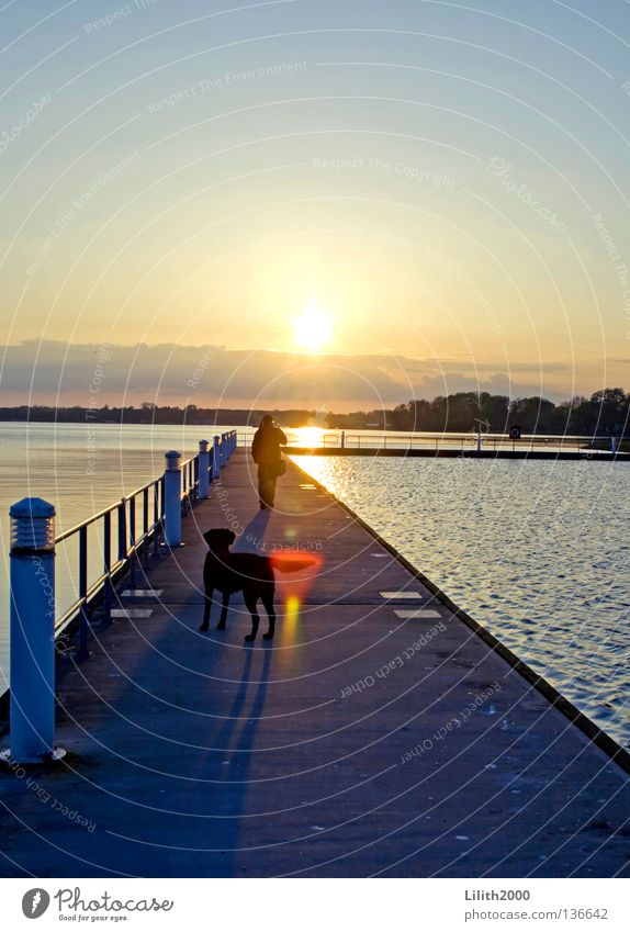 The Evening Dog Footbridge Ocean Lake Black Sunset Yellow Far-off places Horizon Back-light Dazzle Celestial bodies and the universe Lanes & trails Water Shadow