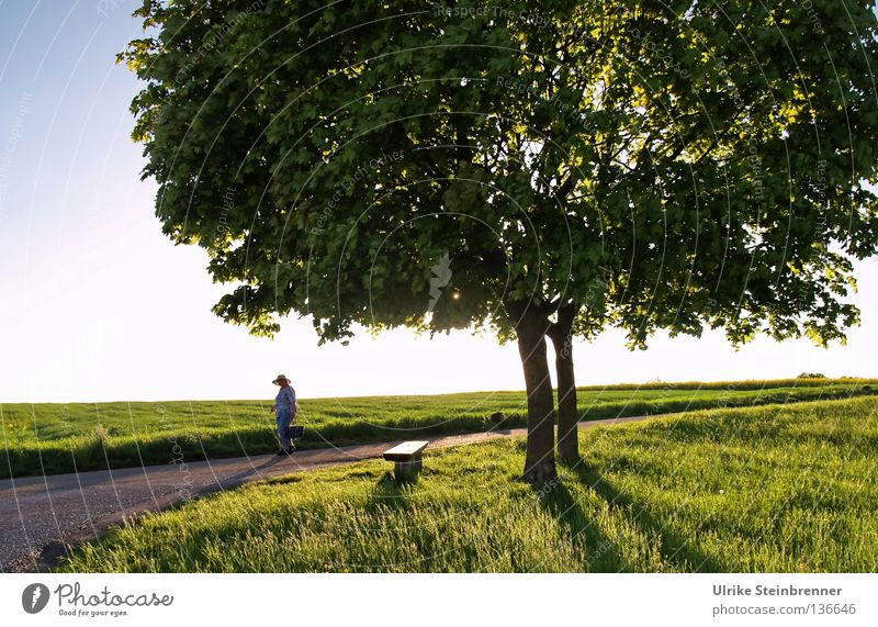 Human being Nature Old Summer Tree Loneliness Leaf Environment Street Spring Meadow Movement Grass Lanes & trails Healthy Going