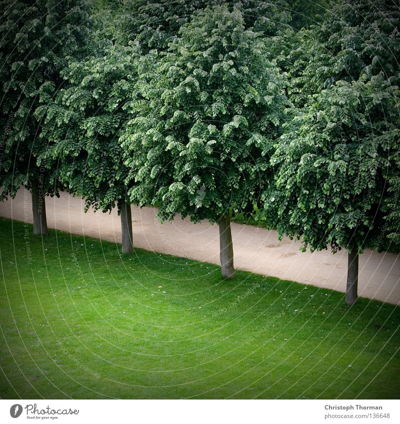 Nature Tree Green Plant Summer Leaf Forest Relaxation Meadow Grass Gray Lanes & trails Park Air Hiking Wind