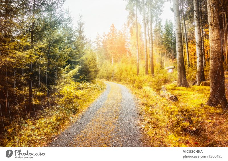 Nature Vacation & Travel Plant Tree Leaf Forest Autumn Lanes & trails Background picture Garden Park Design Soft Beautiful weather Fir tree Autumn leaves