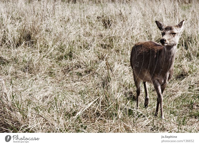Nature Summer Animal Brown Wild animal Wild Observe Dry Mammal Caution Deer Drought Timidity Badlands Roe deer Steppe