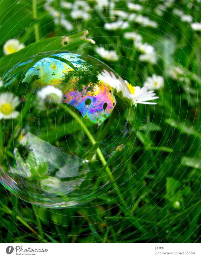 Green Colour Meadow Grass Air Aviation Bubble Daisy Meadow flower Prismatic colors