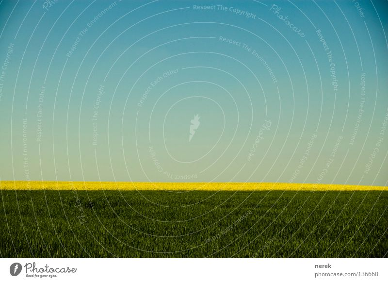 Beautiful Relaxation Meadow Spring Field Gold Free Easy Flexible Brazil Canola Airy
